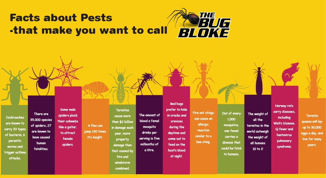 facts about pest infographic