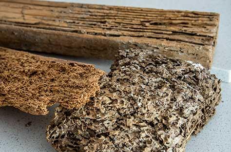 termite treatments - termite wood
